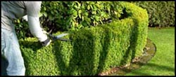 Tree & Shrub Care Kennesaw, Ga